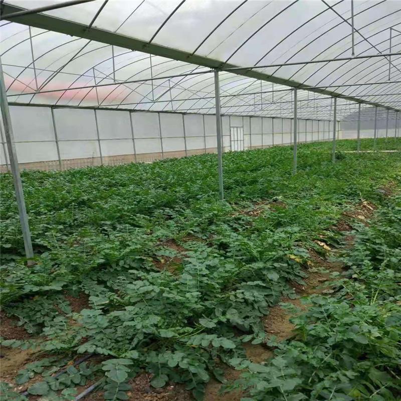 简易抗风外遮阳连栋大棚 镀锌连栋温室大棚 农用蔬菜连栋薄膜温室