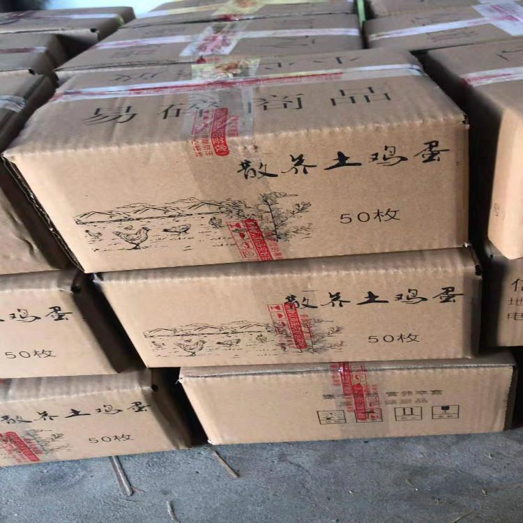 鼎盛种业 种蛋 五黑种蛋批发 厂家直销基地 欢迎咨询 厂家批发