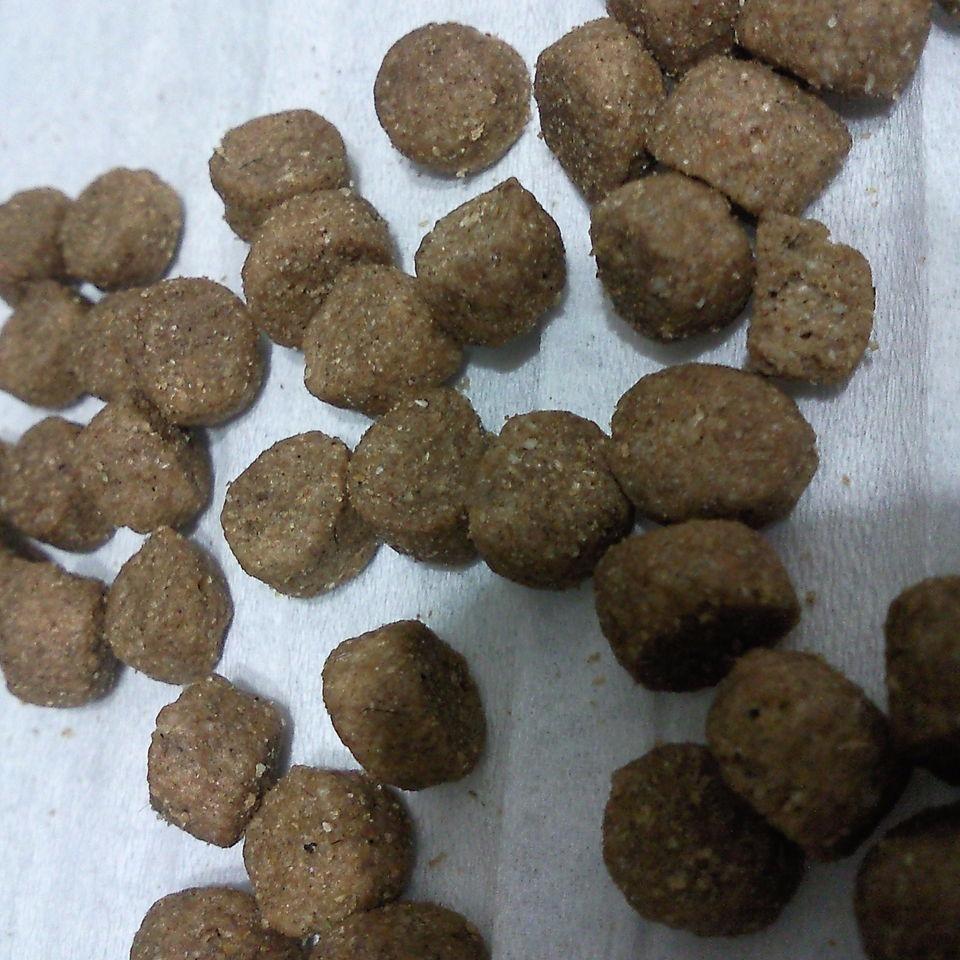 小产量半自动狗粮生产设备