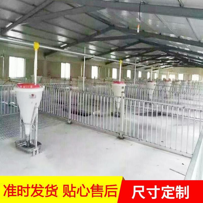 直销养猪料线 机械料线 喂猪猪自动料线 现货供应