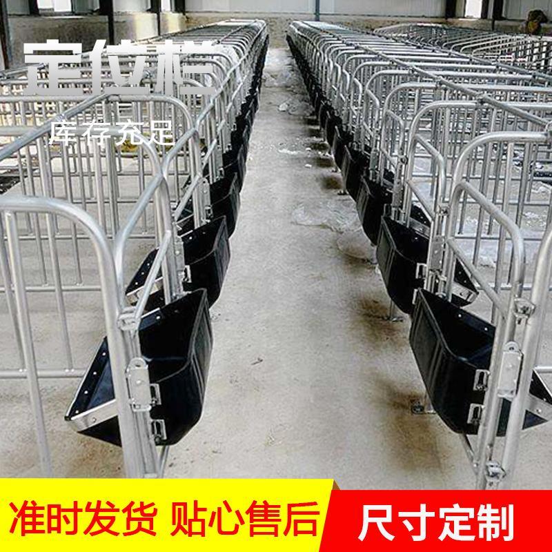 宏栋畜牧 2.2m*6m*0.9m母猪定位栏 定位栏 限位栏