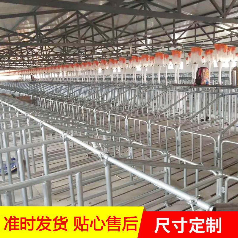 畜牧养殖设备猪场自动料线镀锌板料塔