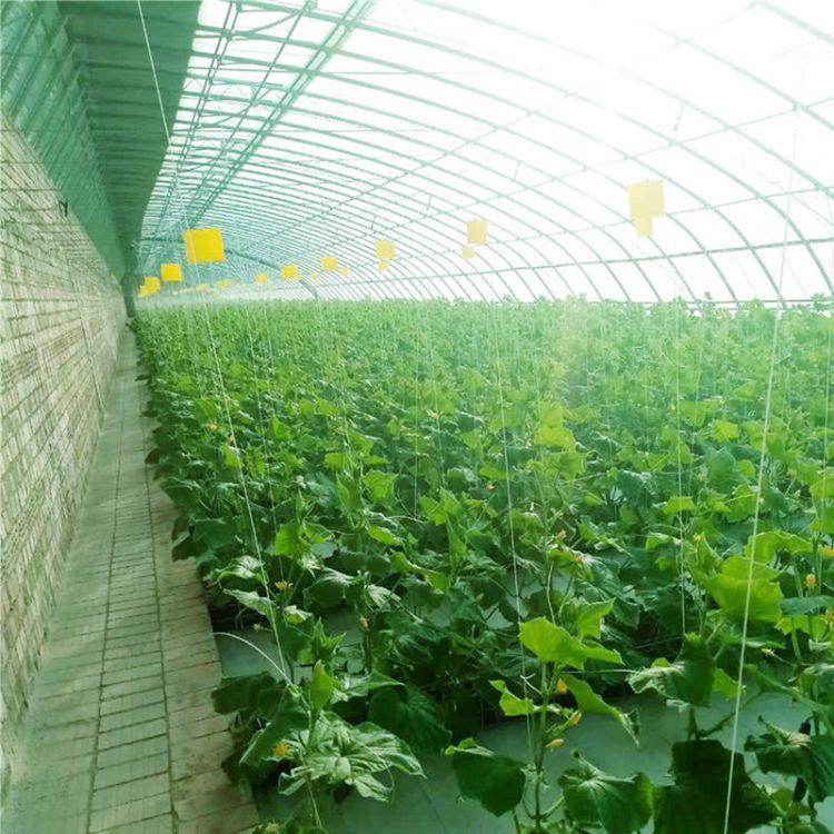 花卉连动薄膜温室大棚 薄膜温室大棚生产公司 金纳