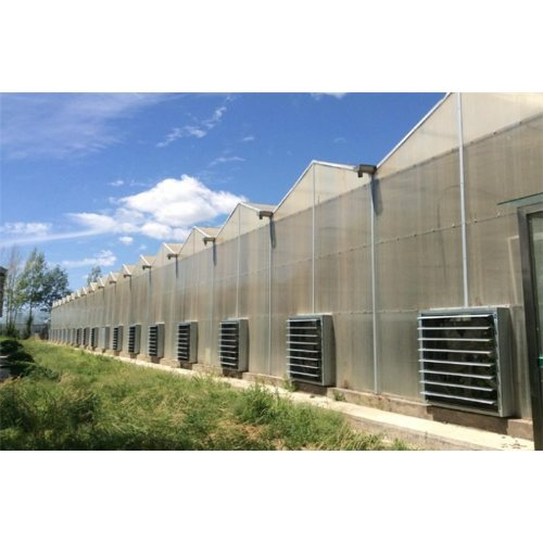 智能阳光板温室企业 凯泽 智能阳光板温室用途