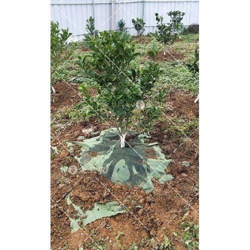 果树田防草地膜哪种好 中药材防草地膜群 爱卫农