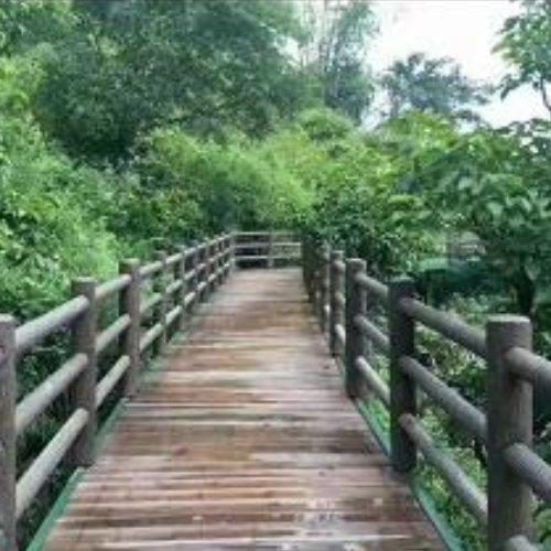 新农村仿树皮水泥木桩订制 河边仿树皮水泥木桩哪里有卖 丽景建材
