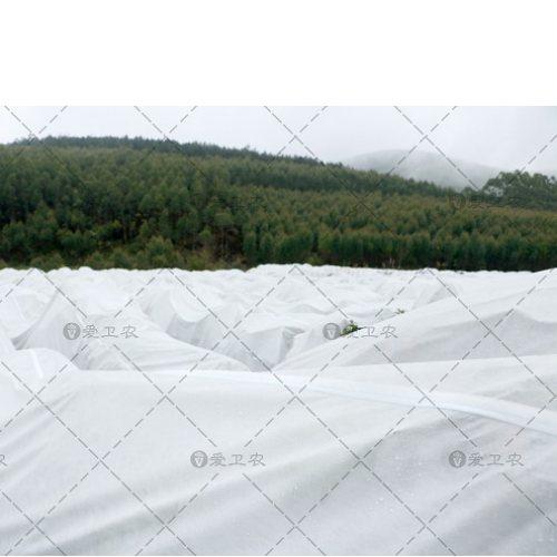 爱卫农 苗木冬季防冻布供货商 水管无纺防冻布生产商