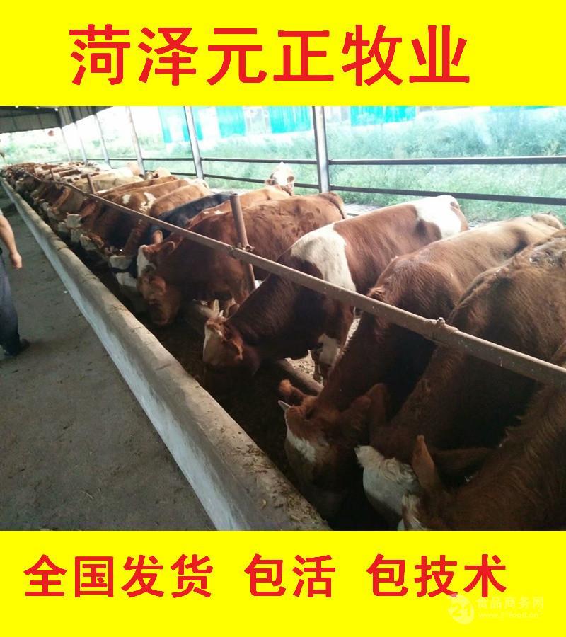 南宁肉牛犊今日报价