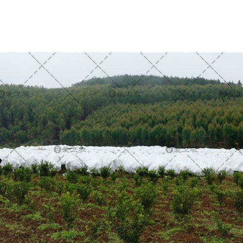 砂糖橘留树保鲜防寒布报价 爱卫农 园林编织防寒布图片
