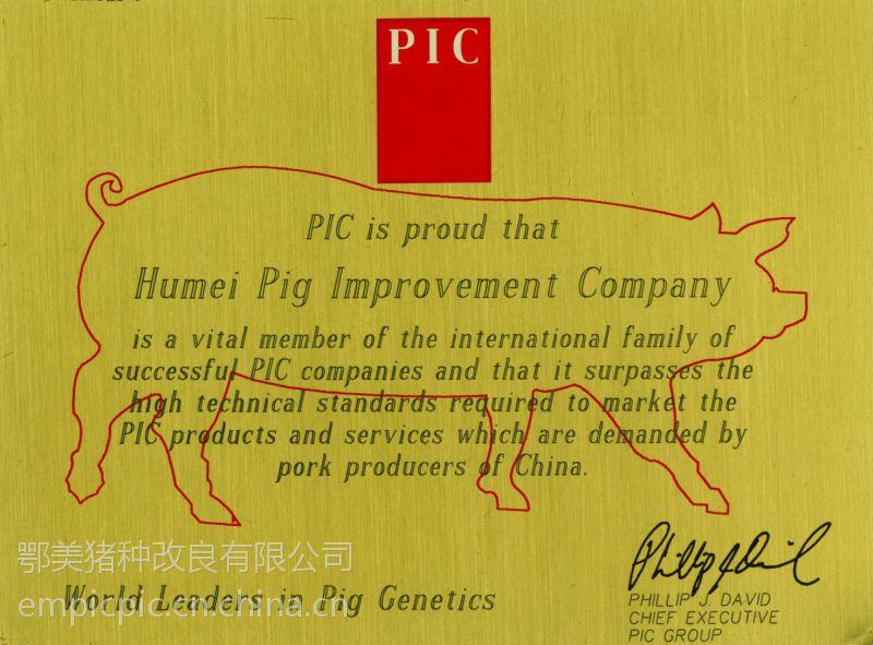 供应浙江嘉兴原种猪场嘉兴长大二元母猪嘉兴父母代母猪嘉兴种猪场嘉兴仔猪