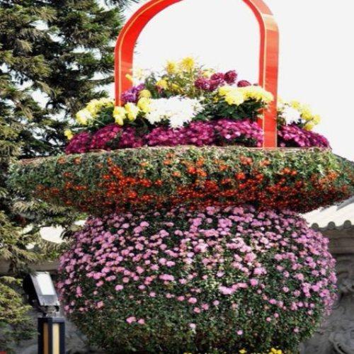 高品质红宝石萱草 齐洲 优质品种红宝石萱草 红宝石萱草盆景盆栽