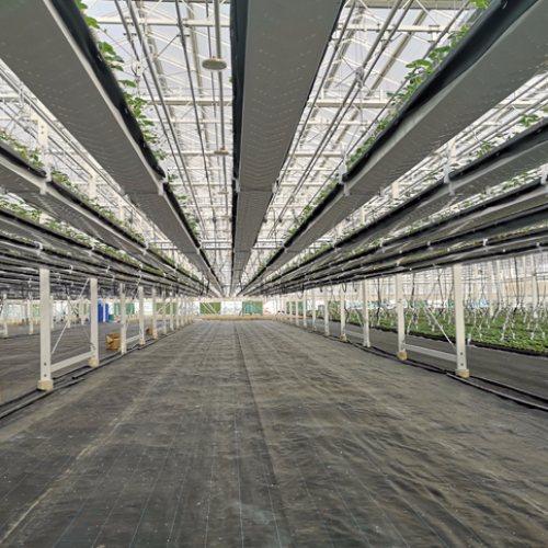 高架草莓栽培槽供应商 草莓专用栽培槽生产商 泓稷科技
