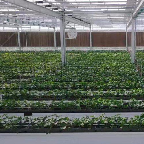 泓稷科技 空中草莓几字槽生产商 草莓专用几字槽供应商