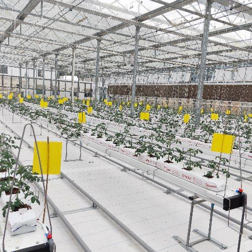大棚支架式栽培槽工厂 泓稷科技 彩椒支架式栽培槽批发