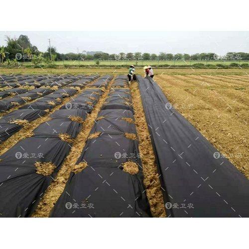 爱卫农 桃树抑草布生态袋批发 葡萄抑草布材料 生态袋抑草布价