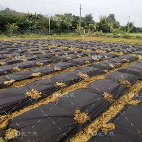 盖膜防草地布生态袋批发 爱卫农 茶园防草地布电话