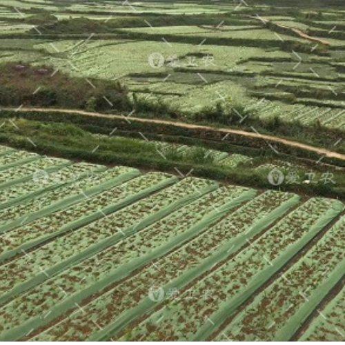 爱卫农 果园生态防草地布打孔 墙体防草地布铺法