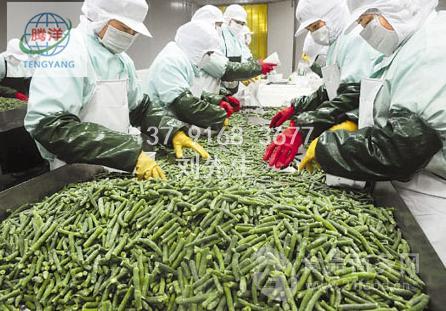 厂家供应农产品速冻机