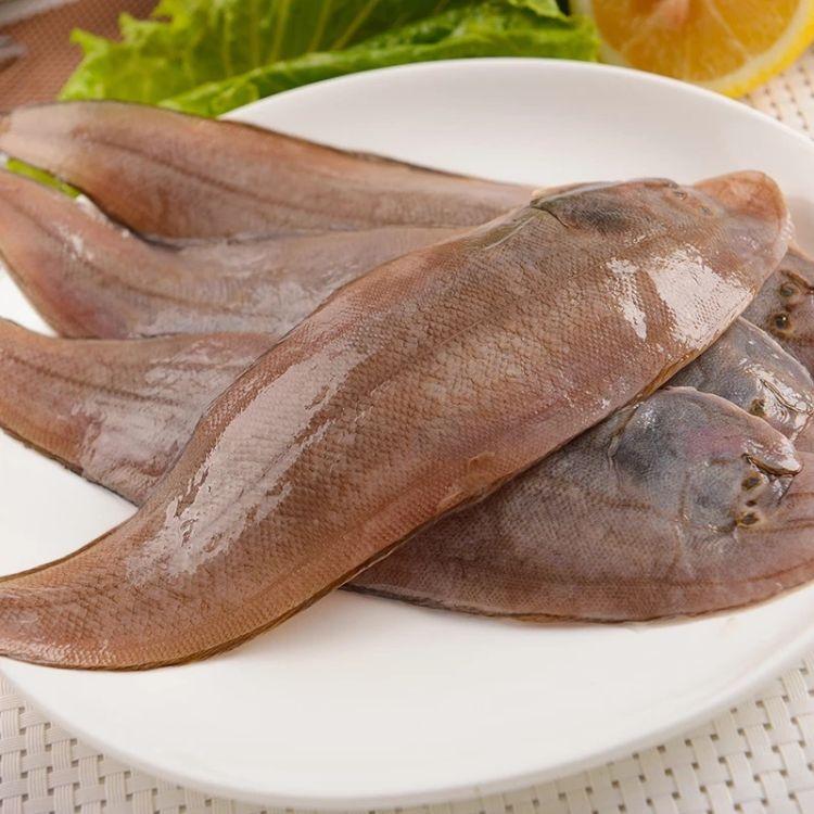东海野生龙利鱼玉秃舟山鲜活冷冻踏板鱼牛舌头鱼海鲜冷冻水产海鲜厂家直销批发