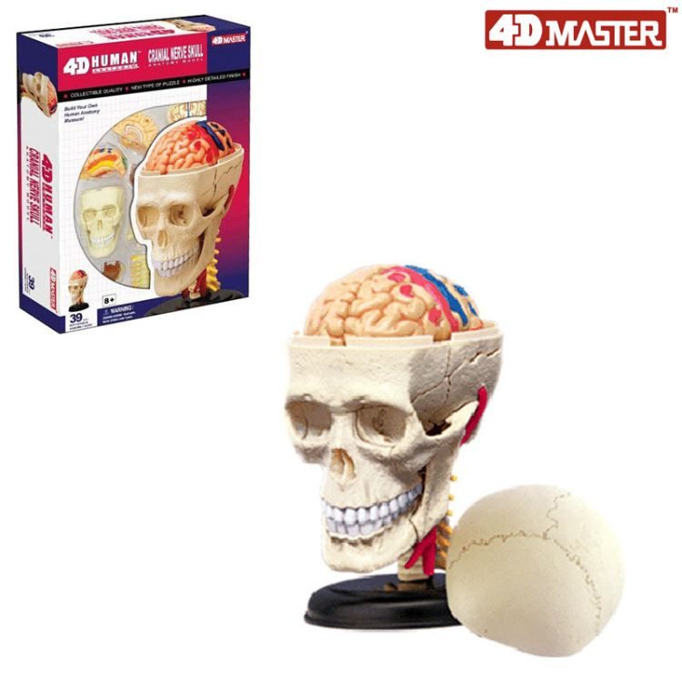 4DMASTER颅神经头骨人体拼装模型教学教具26053