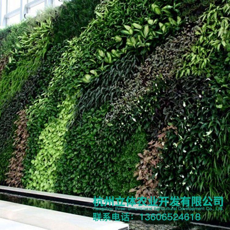 定制 装饰生态植物墙 景观绿化室外墙体植物墙