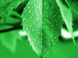 厂家供应优质保绿素 叶绿素 山东领扬
