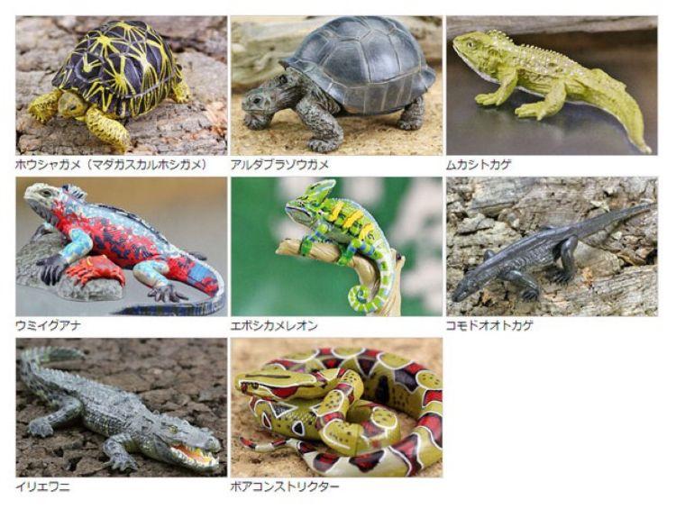 colorata 日本动物模型图鉴 爬行蜥蜴乌龟蛇 正版原厂直销批发