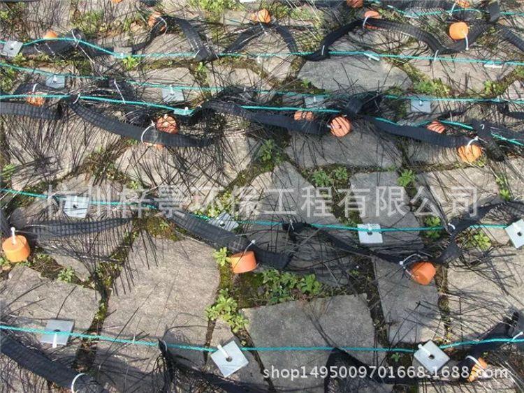 碳素纤维生态草-碳素纤维草杭州梓景环保厂家直销