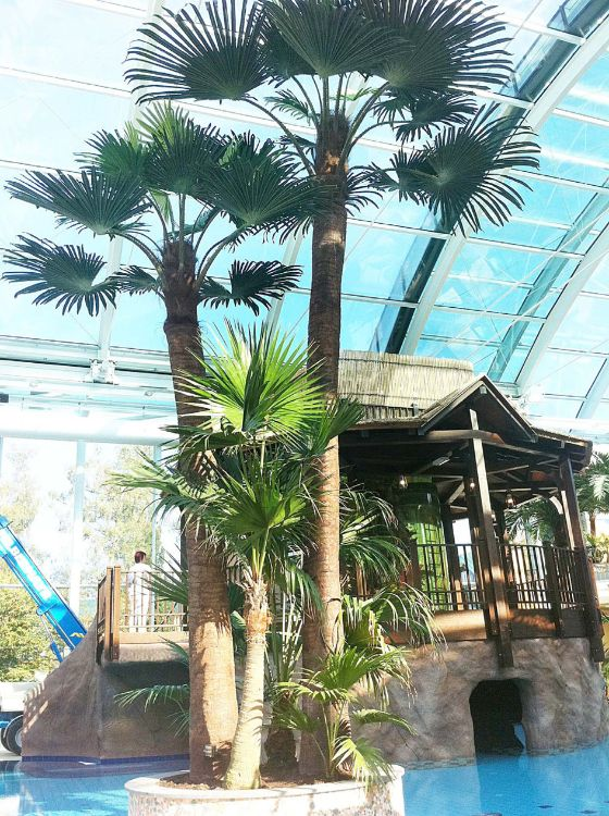 广东仿真葵树老人葵 热带景观植物设计定制 人造针葵棕榈树批发