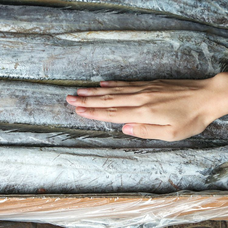 舟山厂家直销冷冻海鲜批发 冷冻新鲜刀鱼 海产品冷冻食品