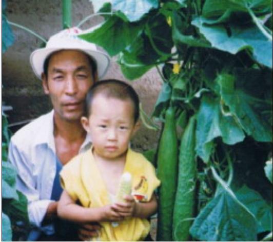 【技术转让】农民育种家 研发经济作物新品种 白葵花 彩黄瓜