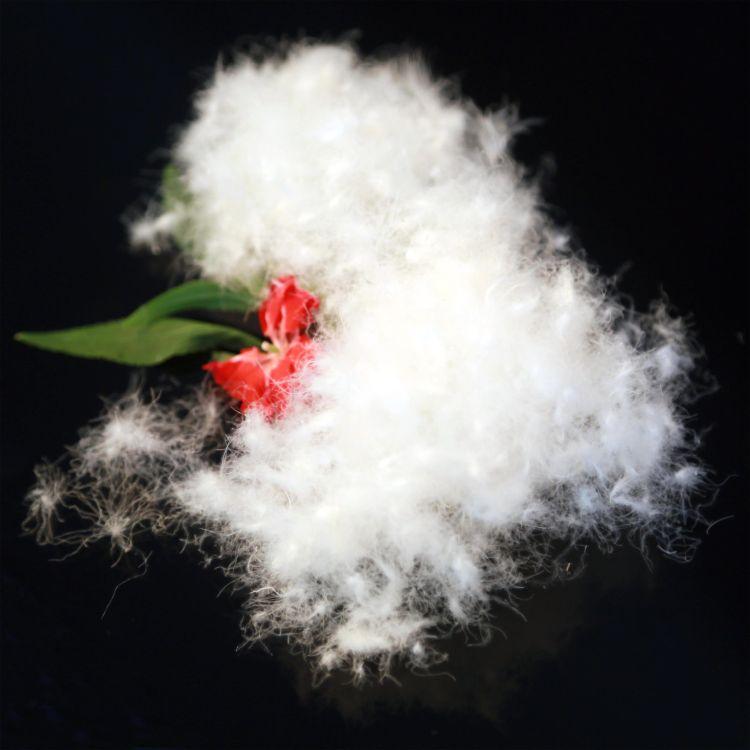 优质白鸭绒 羽绒 90白鸭绒新国标羽绒羽毛批发价格 鸿暖厂家 直销
