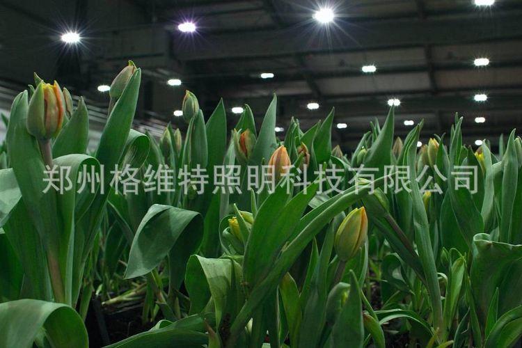 220V 600w 格维特温室大棚植物补光金卤灯,专业品牌,专利产品
