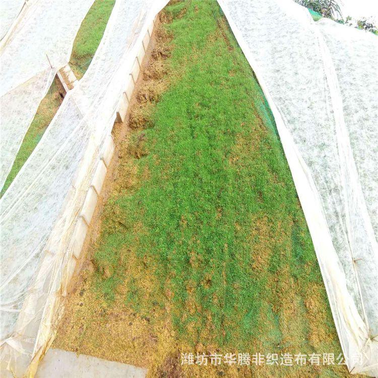 PP纺粘草坪绿化无纺布超薄无纺布草坪覆盖护坡无纺布厂家直销