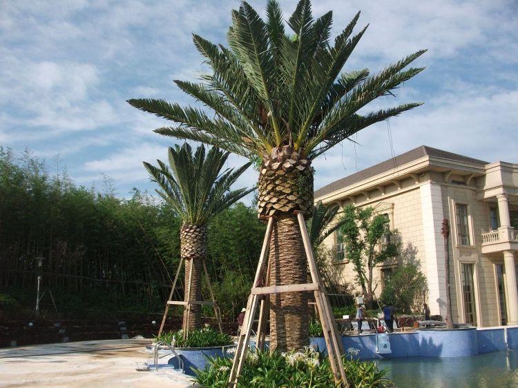 松涛仿真可加长海藻树热带植物仿真加纳利海藻树市政园林工程用树