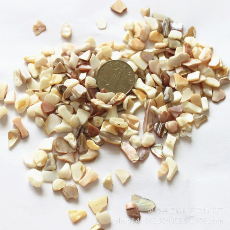 天然贝壳碎片地砖人造石点缀不规则形贝壳颗粒贝壳卵石大量批