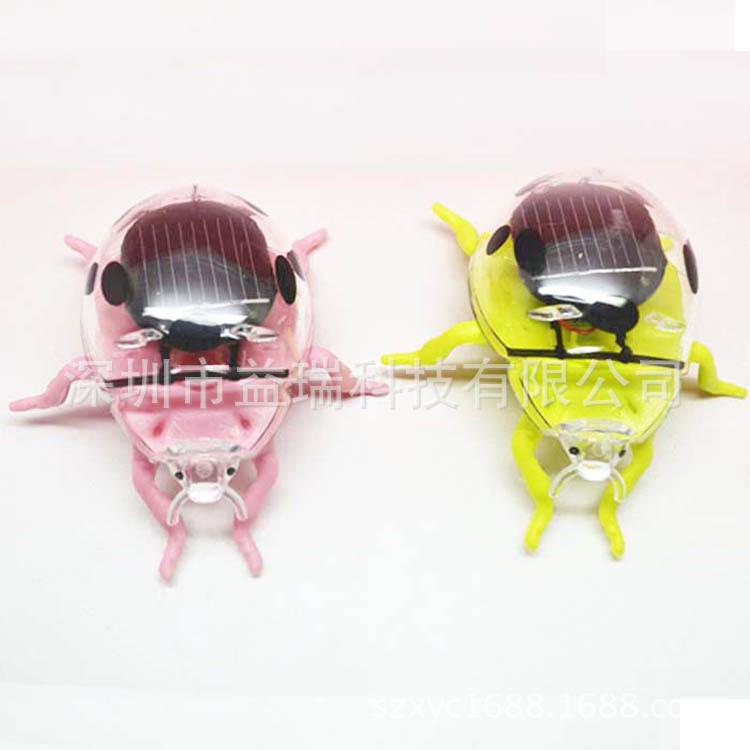 促销太阳能瓢虫创意科普教育仿真昆虫玩具礼品送孩子广告促销佳品