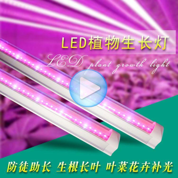 【1.2米】红蓝LED植物生长灯T8灯管育苗多肉专用补光植物灯管