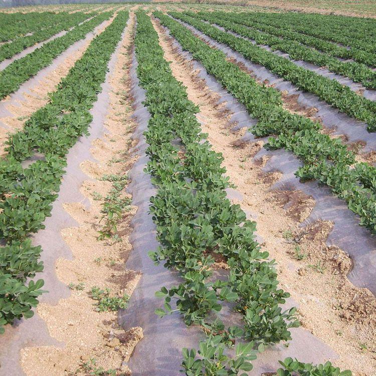 平步园林 黑色农用 双色反光地膜 银黑反光塑料农膜 地膜厂家