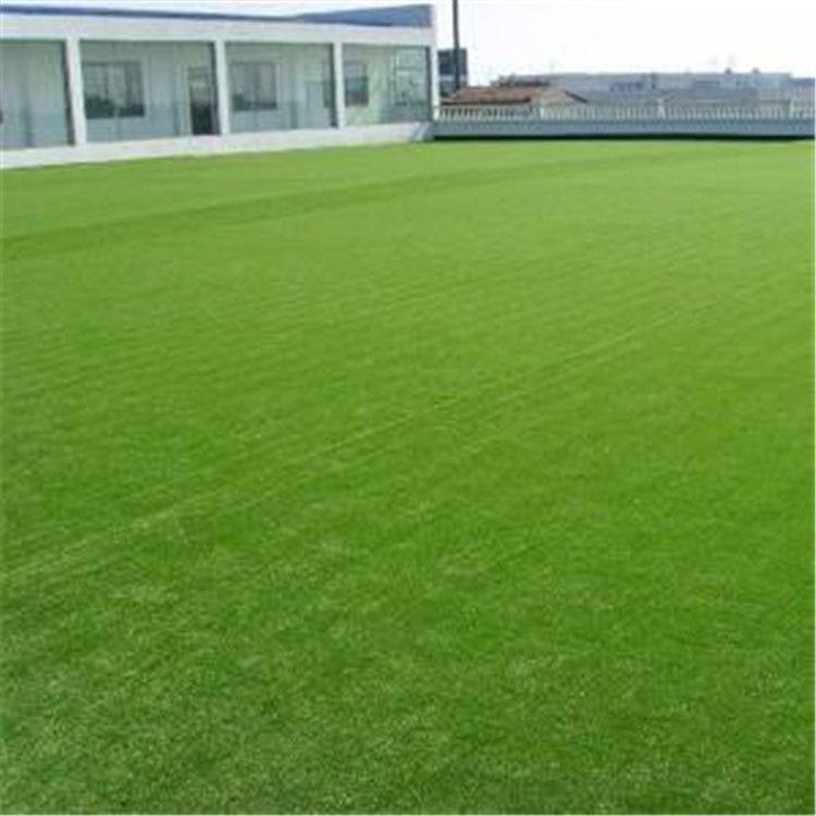 仿真草坪 塑料人造垫子 假草皮绿色草
